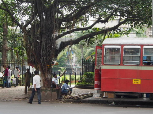 bus, trees, sugarcane
